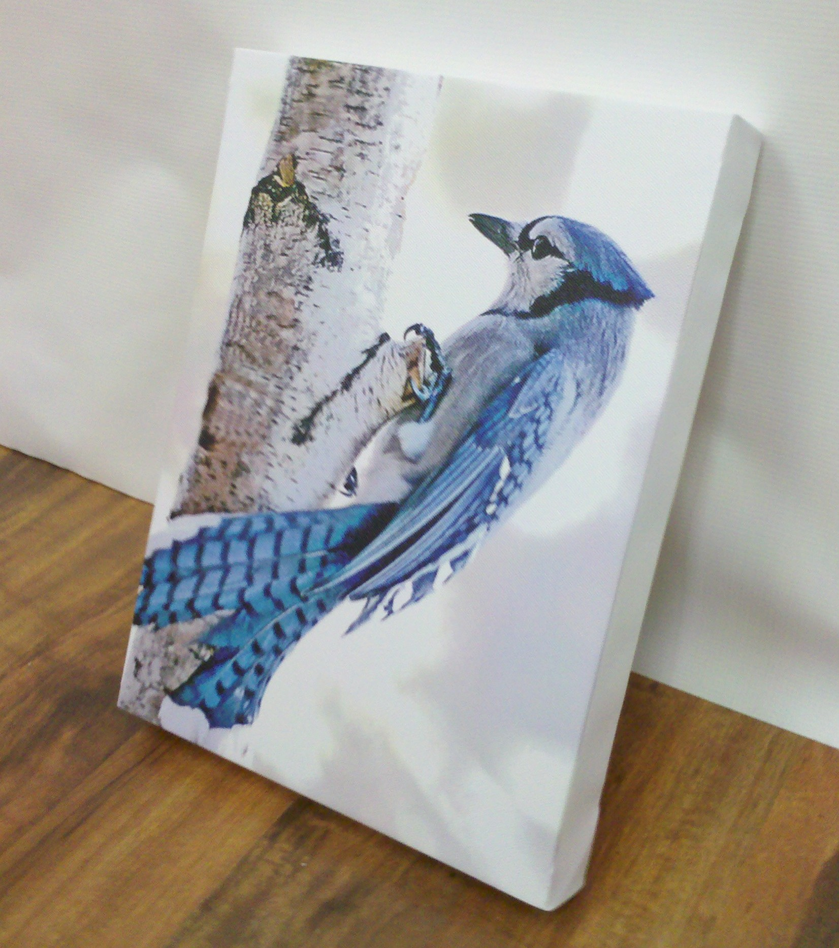 Blue Jay Canvas Wall Art from Banners.com